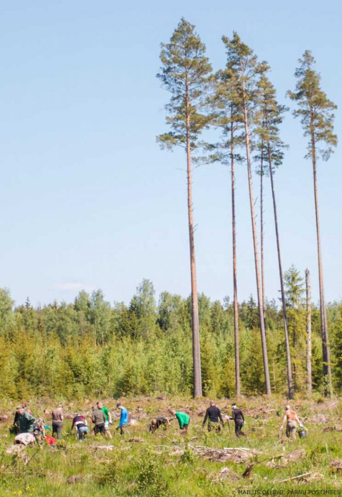 planting trees. plantind forest